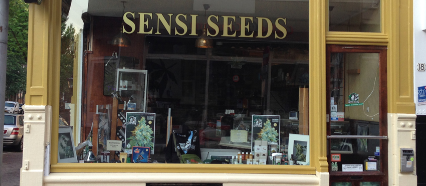 sensi-seed